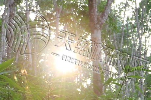 海南橡胶员工申诉评审委员会首次开评
