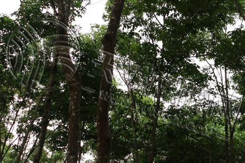 《华宇代理工资_前5月越南对印度橡胶出口量达2.75万吨》