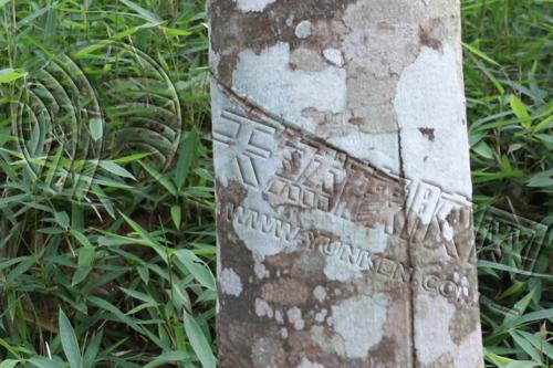 《华宇是什么平台_[知识点get]天然橡胶的加工和成分》
